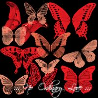 Butterfly Wings Brushes by NoOrdinaryLove