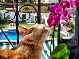 A cat whith a flower by faluki0702