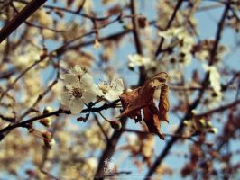 Blossom And Withered Foliage by PornuriMajid