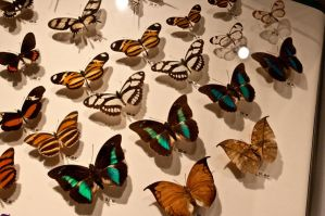 moths and butterflies stock144 by hatestock
