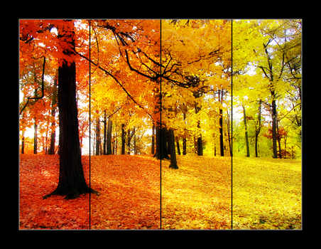 the colors of autumn by LobotomyDoLL