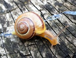 Young snail by MisterKrababbel