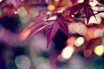 AUTUMN :: Leaves II by abloom