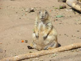 Prairie Dog (1) by LeraDraco69