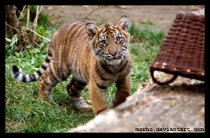 is this a small-cute-fluffy-tiger-babys-eater? by morho