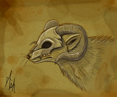 Ram skull by Ash-Dragon-wolf