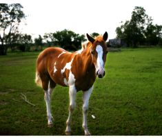 painted colt by TlCphotography730
