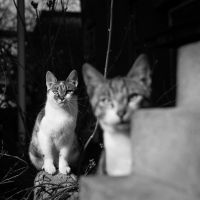 2 Cats by bogdanpetrovan