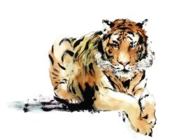 Malayan Tiger by young920