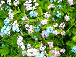 blue and pink flowers by Darta007