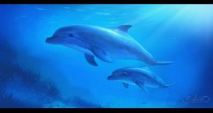 Dolphins by simon buckroyd by Binoched