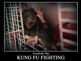 Kung Fu Fighting by angelratdesigns