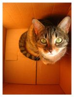Cat in a Box by FuchsiaG