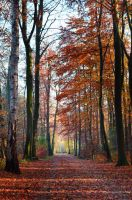 Autumn colors by Lodchen-Photography