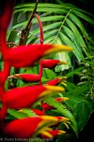 Flamingo Flowers by Ensoled