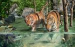 Tiger's Water Park by DigiPntr