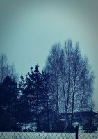 Cold trees by brzeginia