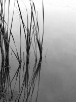 Reeds by tracy-Me