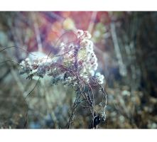 Spring is comming V by lotos15