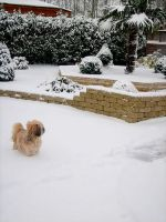 My dog at the snow by alieetf