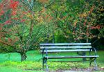 Park Bench by amixer