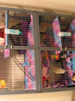 Ferret Nation rat cage by MinionofSloth