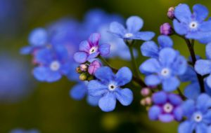 Forget me not II by Bozack