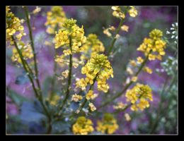 Golden Flowers by sunsetchaser