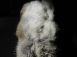 Rabbit Fur 29 by TRANS4MATICA