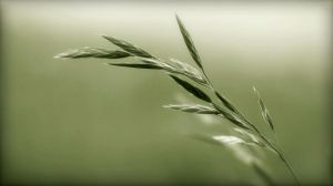 Herbes folles by Douce-Amertume