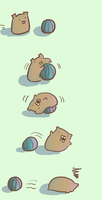 Guineapig Pilates by Marsuministeri