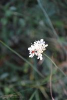 Little white petals by AvenueOfLoneliness