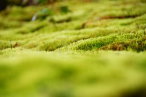 The small green world by Heurchon