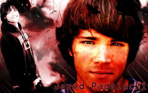 Jared Padalecki Wallpaper by CertainlyLostFameGal