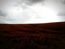 Fall on the Prairie by Photography3136
