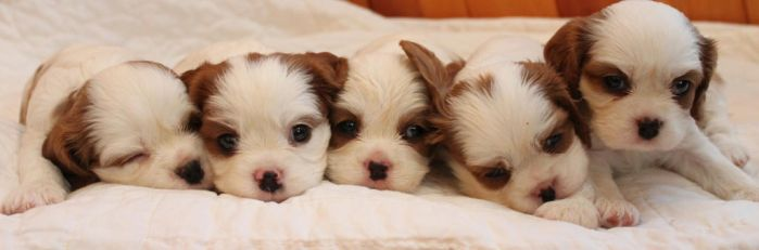 The Puppy Cluster by Lambieb123