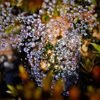 Cobweb deep into the moss by MissFlykt