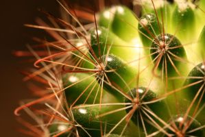Cactus by spuney