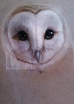 Barn Owl by Missleepify