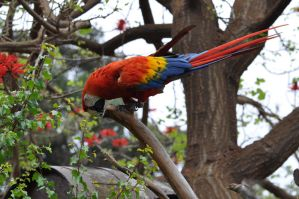 Parrot in a tree by MDBOOKCOVERS