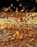 The Dance Of The Leaves by Angelicsweetheart