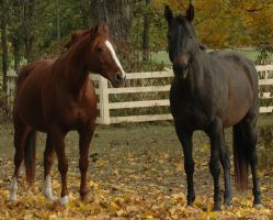 Reba and Purdy by stockhorse