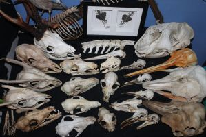 Skull collection by Monopolymurder