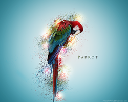 Parrot Wallpaper by NickchouBG