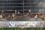 Drains to Ocean by WmBCrawford