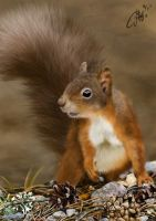 Red Squirrel by josephinekazuki
