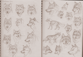 Sketchy Wolf Faces by Pseudolonewolf