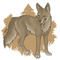 Coyote Commission by TaksArt