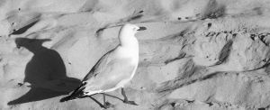 SEAGULL by DreamControl371