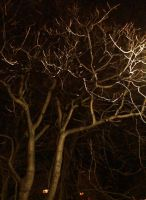 crazy branches by raverqueenage